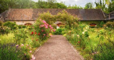 garden, roses, herbs